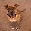 Ruby Ann - 11/1/14 - Meredith Maples