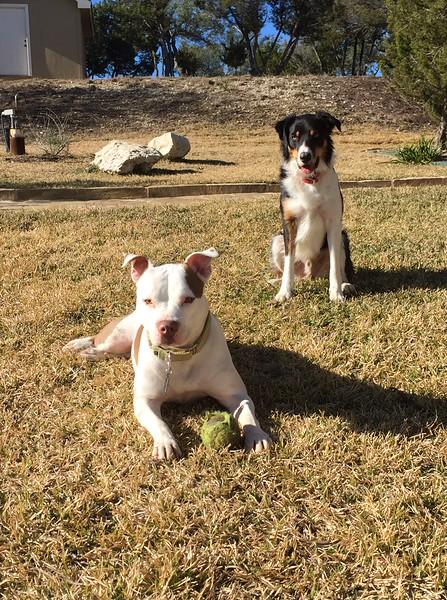 Zena - 2/16//2015 for foster