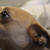 austin pets alive tarrytown