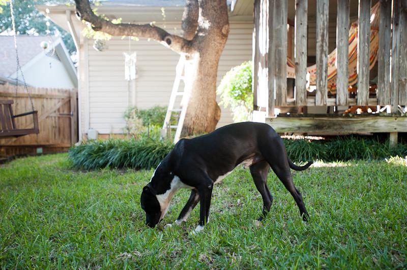 Austin Pets Alive