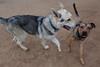 Jax and Shelby - 5/17/15 - Karen Hardwick