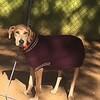Layla - 12/29/14 - Heather Marie