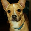 Bug - 6/7/2015 - For Foster