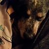 Gambit - 3/8/15 - Kristen Ross