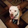 Trevor - 12/20/14 - for foster