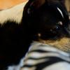 Kitty-01/12/15-Marcy