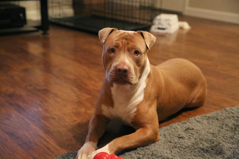 Hollywood (Woody) - 12/16/14 - for foster