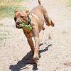 Baxter  08.06.15  Cheri Linwood