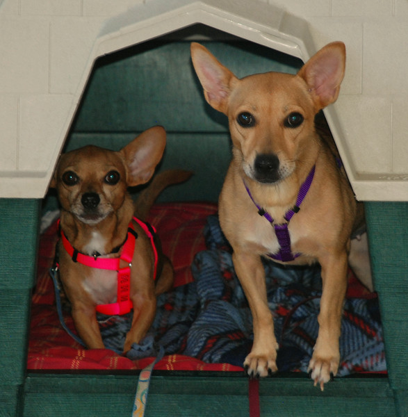 Lady (on left) and Sally (on right) - 8/15/14 -  Paula Taylor