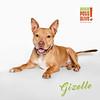 Gizelle - 2/24/16 - Mike Ryan