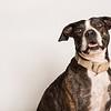 Lassie - 10/25/15 - Andy Medina