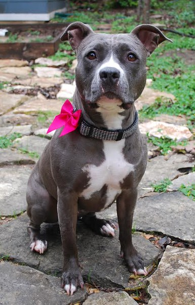 Blue Meadow - 12/1/2015 - for foster