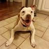 Vega - 11/15/14 - for foster