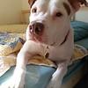 Vega - 5/15/2015 - for foster