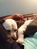 Oscar - 10/3/14 - for foster