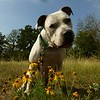 Oscar - 12/11/14 - for foster