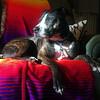 Lassie - 11/30/15 - Zanne R. Tarlow