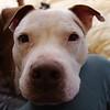 Vega - 12/5/14 - for foster