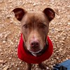 Buster Brown - 1/20/2016 - Laura LaCoste