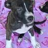 Twizzler 6/3/16 Kathi Miller