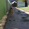 Choko bell- 10/10/14 - for Prof Bump student