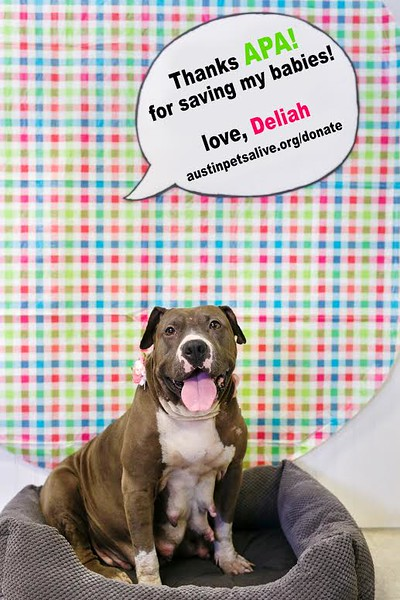 Deliah - 7/20/2016 - Diana Lott