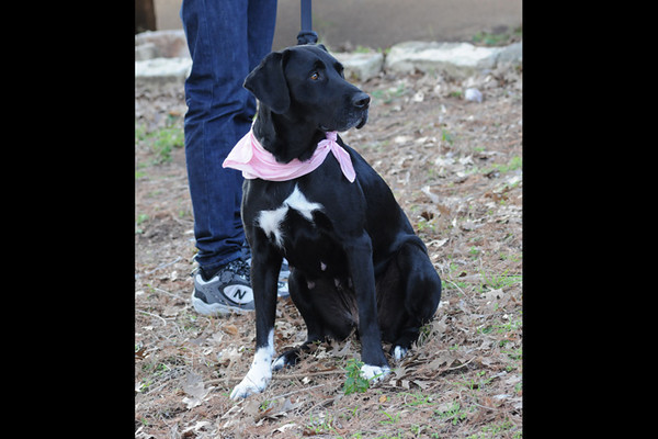 Annie Oakley (photographed on February 22, 2010 by Stuart Phillips d/b/a Grateful Dog Photography)