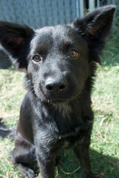 Twyla - adopted