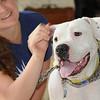 WILBUR   (photographed April 2010 by Stuart Phillips d/b/a Grateful Dog Photography)