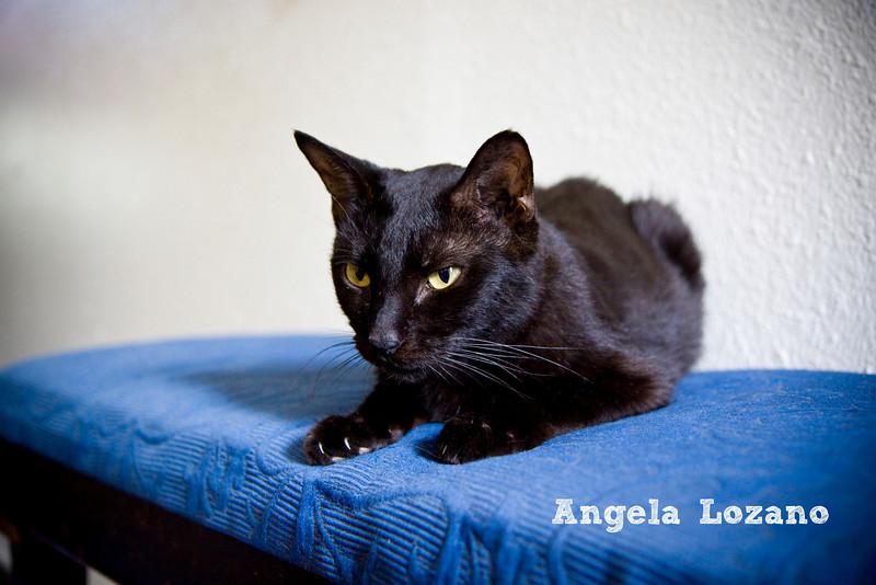 Nancy, Angela Lozano, 8/12/10