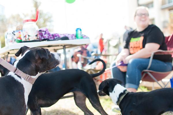 Foster Adoption Event - 12/6/14 - Kerstin Wiggins