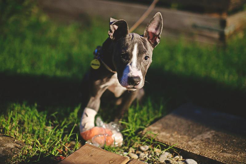 Delilah - 5/23/2015 - for foster
