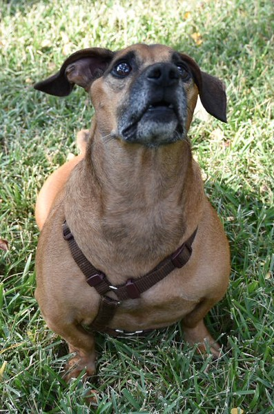 Chunkster - 9/24/2015 - for foster