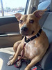 Lacey - 8/30/2015 - for foster
