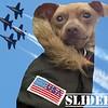 Slider - 3/12/2015 - for foster