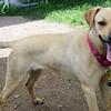 Stacy - 05.26.15 - Cheri Linwood
