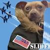 Slider - 3/16/2015 - for foster