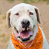 Jasper - 9/22/2015 - Beverly Guhl
