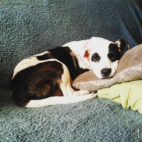 Julep - 8/3/2015 - for foster