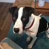 Rae - 1/2/15 - for foster