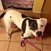 Polly - 12/7/14 - for foster