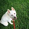 Sadie Ann - 7/15/2015 - foster