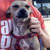 Little Stan - 09.13.15 - Lauren Hodges