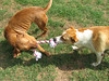 Bonnie (L) and Apache (R) play
