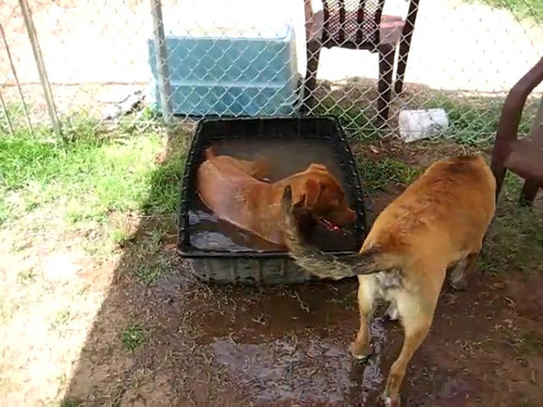 Baby playing with her shelter play buddy, Diesel