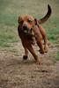 Barney - Running is so much fun