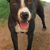 Billy Jean A505094 - ks14