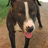Billy Jean A505094 - ks13