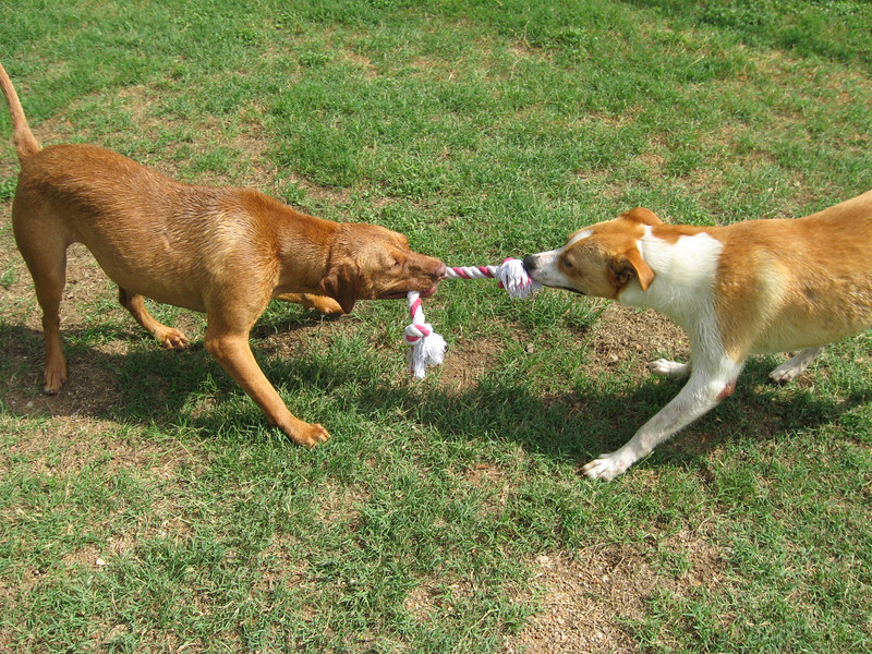 Bonnie (L) and Apache (R) play