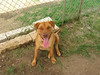 Bonnie_A498364_IMG_2009_cml